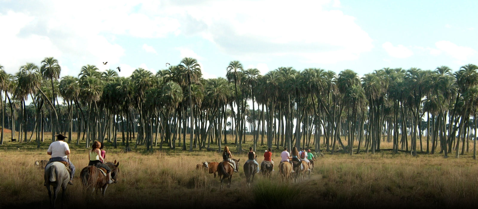 Exotic palm trees plain, creeks and forest in gallery, where know the beauty corners of this place, doing boating, mountain bike, horse riding and trekking. Many activities in a place without comparison in Argentina